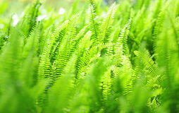Green plant background Royalty Free Stock Photos