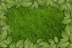 Green plant background Royalty Free Stock Images