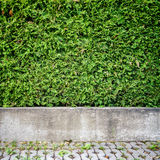 Green plant background Stock Images