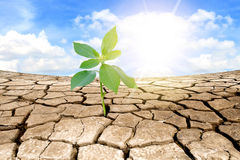 Green plant on background of cracked soil Royalty Free Stock Images