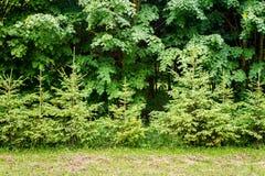 Green plant background Stock Photos