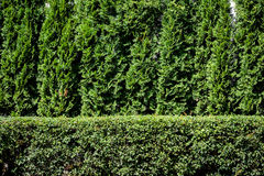 Green plant background Stock Photo