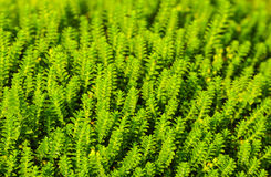 Green plant background Royalty Free Stock Photography