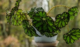 Green plant in a beautiful pot stock photography