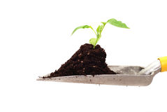 Green plant for better environment Stock Photos