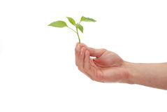 Green plant for better environment Stock Photo