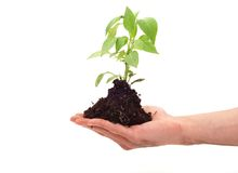 Green plant for better environment Royalty Free Stock Image