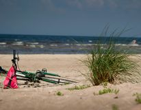 Green plant and bicycle, on beach sand with sea in background royalty free stock photos
