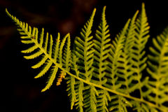 Green Plant. With black backround stock photo