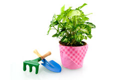 Green plant with blue shovel and green rake Royalty Free Stock Image