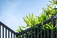 Green plant with blue sky background. Green plant in garden with blue sky background royalty free stock photos