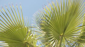 Green plant and blue sky. Palm tree leaves. Warm climate of tropics stock footage