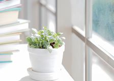 Green plant and book for relax near white window of spring time and sunny day. Lifestyle Concept Royalty Free Stock Images