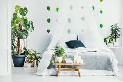 Green plant and candles on wooden bench in fashionable bedroom interior with canopy. Green plant, books and candles on wooden bench in fashionable bedroom royalty free stock photography