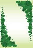 Green plant border Royalty Free Stock Image