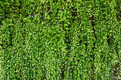 Green plant botany background Royalty Free Stock Photo