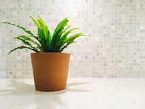 Green plant in the bright kitchen Royalty Free Stock Image