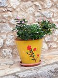 Green Plant in Bright Yellow Pot, Greece. A bright yellow flower pot, decorated with a red flower motif, growing a small green leafy shrub, resting outside a Royalty Free Stock Photo