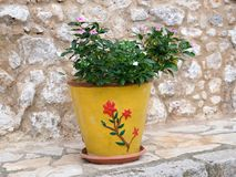 Green Plant in Bright Yellow Pot, Greece. A bright yellow flower pot, decorated with a red flower motif, growing a small green leafy shrub, resting outside a Royalty Free Stock Images