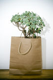 Green plant in a brown paper bag. Green plant in a brown recycled paper bag on a wooden table Royalty Free Stock Photography