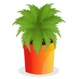 Green plant in a cache-pot on a white background Royalty Free Stock Photo
