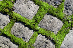 Green plant between cement bricks background. Garden stone path royalty free stock images