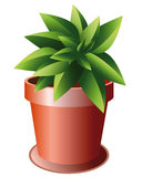 Green plant in ceramic pot. Green plant growing in ceramic pot with a plate under royalty free illustration