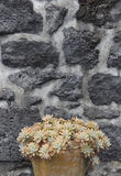 Green plant in a ceramic pot and volcanic stone facade Stock Photo