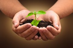 Green plant in a child hands Royalty Free Stock Images
