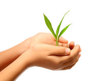 Green plant in children hands Royalty Free Stock Photos