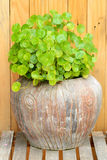 Green plant in clay pot Stock Photos