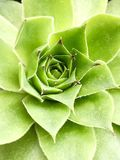 Green plant closeup Stock Images