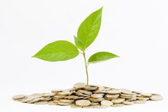 Green plant and coins Stock Photos