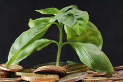 Green Plant and Coins Stock Photography