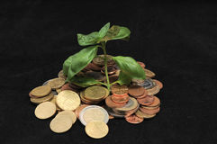 Green Plant and Coins Royalty Free Stock Photos