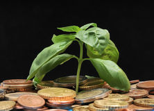 Green Plant and Coins Stock Images