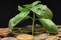 Green Plant and Coins Royalty Free Stock Image