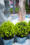 Green plant and colorful pebble stone garden Royalty Free Stock Photo
