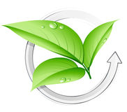 Green plant concept. Isolated on white background vector illustration
