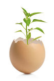 A green plant in cracked eggshell Stock Photo