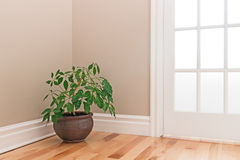 Green plant decorating a room corner Royalty Free Stock Photo