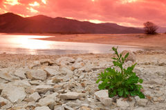 Green Plant in desert Stock Photography