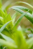 Green plant with dew drops Stock Images
