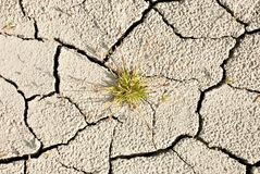 Green Plant in Dry Earth. A small patch of green grass growing out of dry, cracked earth royalty free stock image
