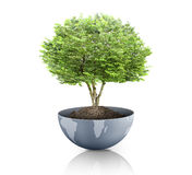 Green plant on the Earth,globe Stock Photography
