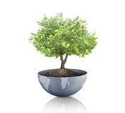 Green plant on the Earth,globe Royalty Free Stock Photography