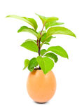Green plant in egg Stock Photos