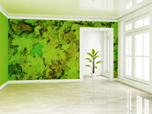 A green plant in the empty room near a window Stock Image