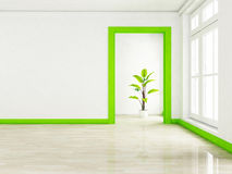 A green plant in the empty room near a window Royalty Free Stock Image