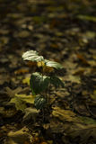 Green plant on the fall stock image